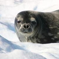 10 Reasons to Run the Antarctica Marathon