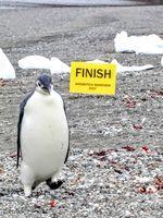2018 Antarctica Marathon & Half-Marathon