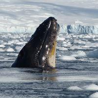 The 14th Antarctica Marathon (Part 2)