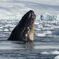The 14th Antarctica Marathon (Part 1)