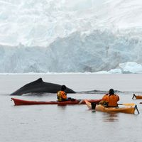 A marathon in Antarctica, truly a one-of-a-kind vacation